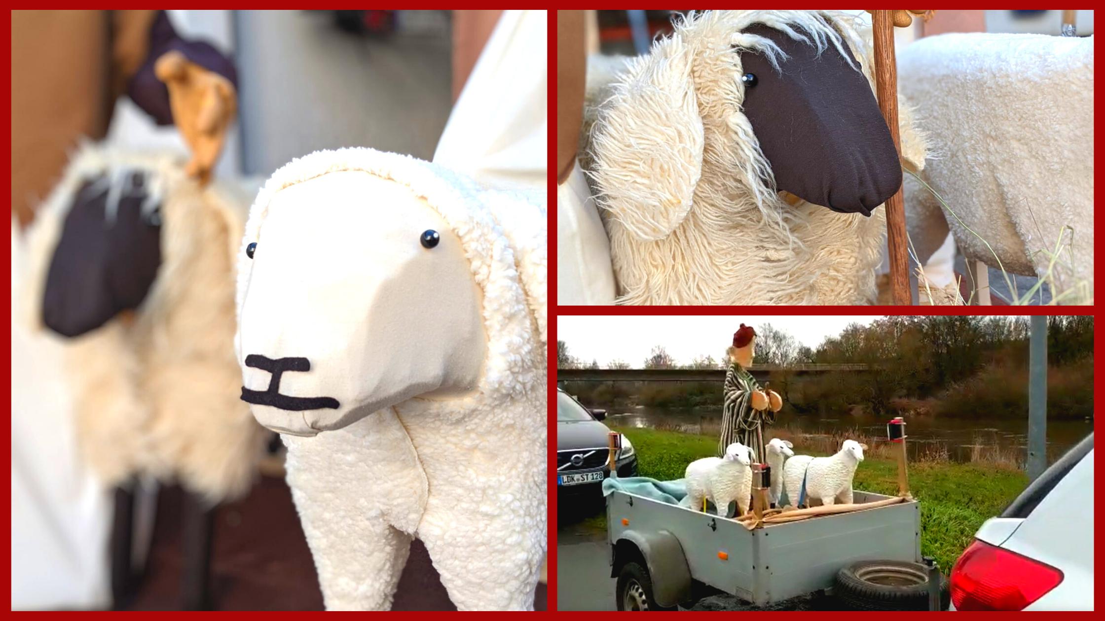 Schafe auf Anhänger für rollende Weihnacht 2020 in Lahnau